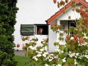 Appartement de vacances à la campagne entre Bielefeld u. Gütersloh.